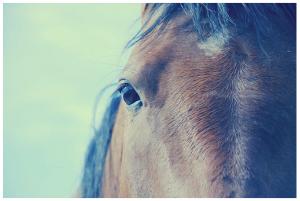 jackson horse