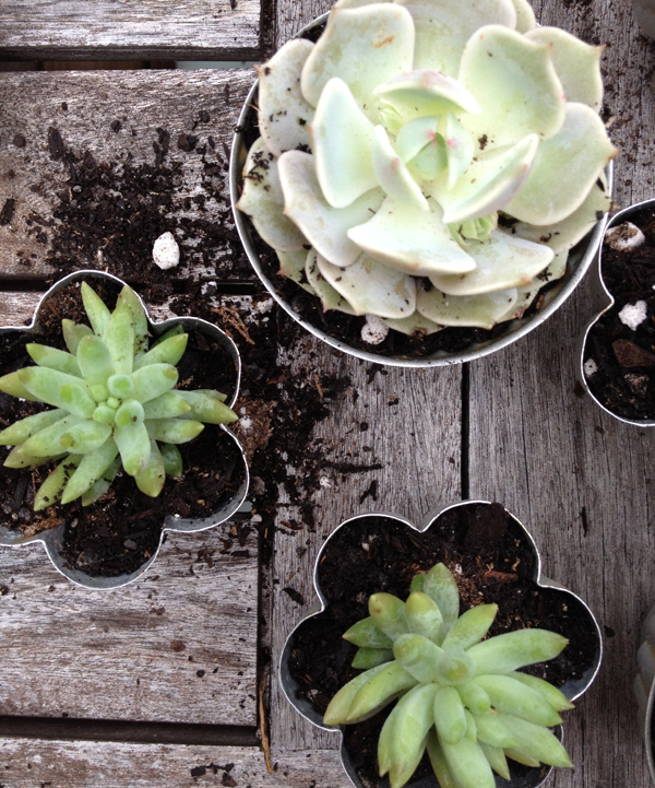 BEBE Blog_Succulent Post