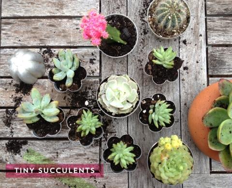 BEBE-Blog_Tiny-Succulents