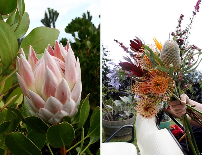 AKL-Maui_Protea-Bouquet