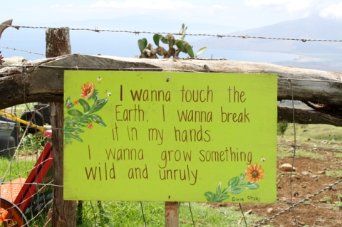 Where-to-Eat-Maui_Roadside-Farm